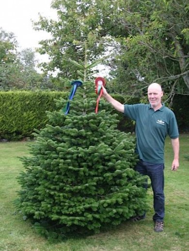 No faking it: The art of growing a real Christmas tree