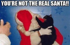 14 pets who are just SO done with Christmas