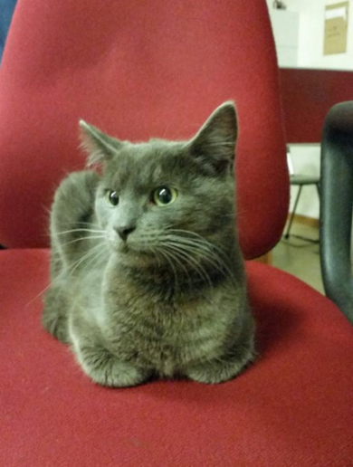 Guards in Finglas have found a cat … and they're not delighted about it
