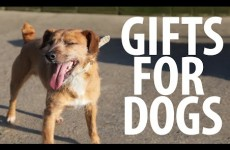 Giving gifts to DSPCA shelter dogs is almost too cute to handle