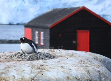 Not the Irishman in question. This is one of the many resident penguins close to a building on island.