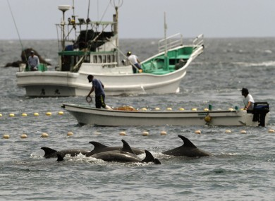 Japanese fishermen hunting bottlenose dolphins in 2010