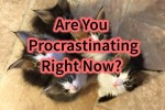 Are You Procrastinating Right Now?