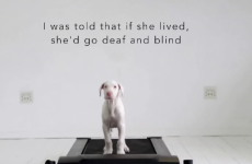 Man who didn't know how long his puppy had to live filmed her every day