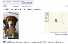 This Craigslist ad for a dog takes quite an unexpected turn at the end…