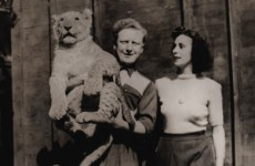 New film tells the fascinating true story of the 1951 Fairview lion escape