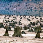 Once a thick and beautiful old-growth forest in the Willamette National Forest in Oregon is now levelled for reservoir development.<span class=