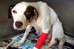 'This was a miracle': Rescue dog finds her way home after week-long search