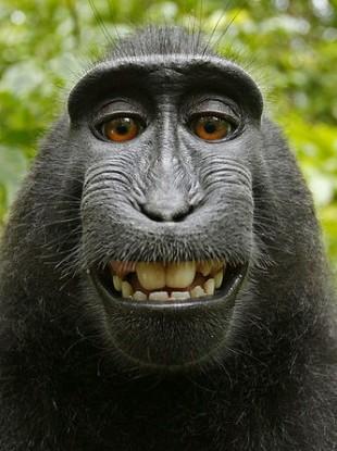 Naruto the monkey