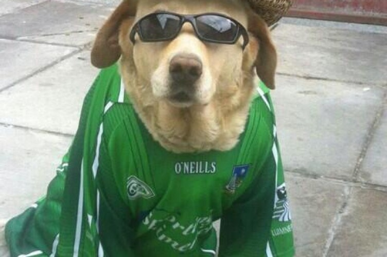 6840b9ebce 19 times Irish dogs were the coolest · The Daily Edge