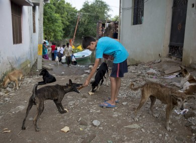 A Indian boy feeds bread to street dogs in Allahabad last month.