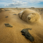 As I was photographing this young grey seal, we both got caught up in a sandstorm.<span class=