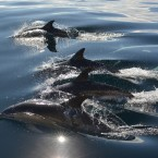 John Burke, from Co Tipperary, won first prize with this shot of dolphins off the coast at Youghal. Ironically, he had been there for a spot of whale-watching.