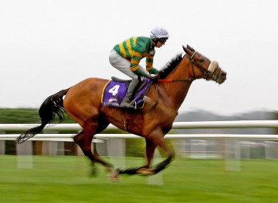 Coney Island won't feature at Prestbury Park this year.