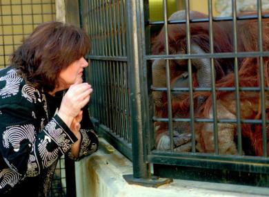 A researcher signing with Chantek at Zoo Atlanta.
