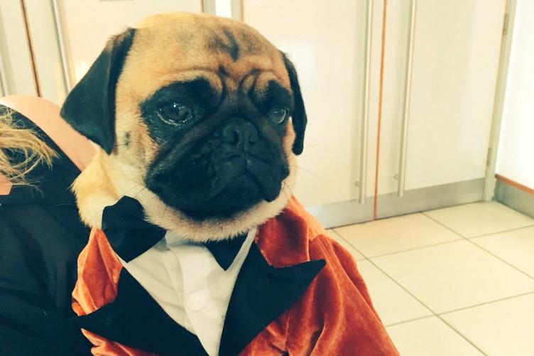 Pug dating service