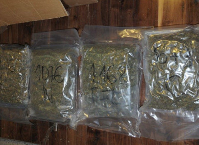Last week's cannabis seizure in Kildare.