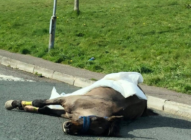 The horse found on the road in Cork yesterday