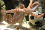 Can we just talk about the wild life of Paul the Octopus for a minute?