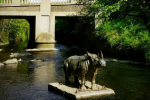 Double Take: The mysterious African rhino that appeared overnight in a Dublin river