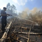 A firefighter extinguishes a peat fire in a forest near the town of Shatura, some 130 km (81 miles) southeast of Moscow, 19 July 2010. Peat swamps started burning in central Russia following an unprecedented heat wave. (AP Photo/Mitya Aleshkovskiy)
