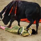 Spanish bullfighter Miguel Angel Perera is trapped in a bullfight at the Las Ventas Bullring in Madrid, Spain. (AP Photo/Daniel Ochoa de Olza)