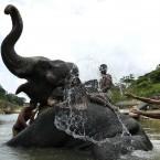 Elephant attendants bathe their elephant in Kandy, Sri Lanka (AP Photo/Eranga Jayawardena)