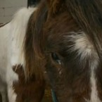 Alfie was rescued in January of this year in a very poor condition. He has been tied to a tree, knee deep in water and he was emaciated and covered in lice.
