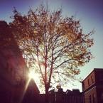 Sunshine through a tree at Dublin Castle