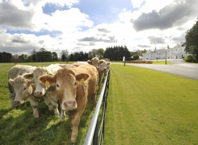 Cows hanging out in a field outside Áras an Uachtaráin earlier this week