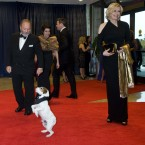 Uggie, the dog from