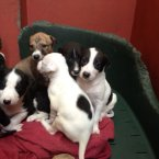 These beauties are a calm and relaxed group of three females and three males. This photo was posted on 31 July. (Image: Madra.ie)