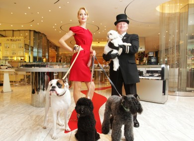 Not every dog knows how to behave as well as these four who were treated to a trip to Brown Thomas.
