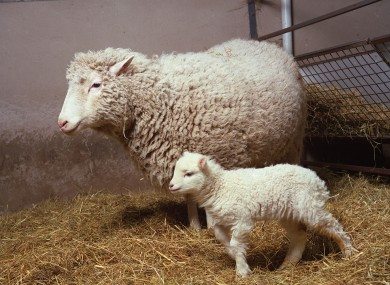 Dolly the Sheep, pictured in 1998 with her own (naturally conceived) daughter Bonnie. Keith Campbell, the scientist who oversaw Dolly's own birth, has died.