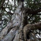 The Mpingo is Tanzania's national tree.