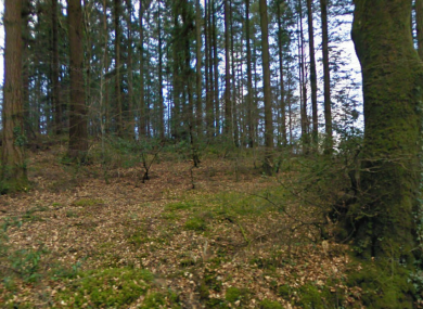 File photo of woodlands near Rathdrum in Co Wicklow.