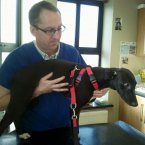Tom Spillane, the vet who saved Taylor's life.