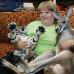 Christie Carr, center, attempts to hold Irwin the kangaroo, right, and Larsen, a baby tiger.<span class=