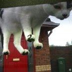 Typical, stubborn, curious cat.<span class=