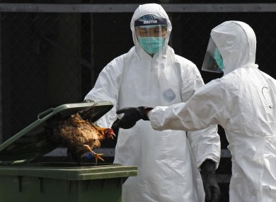 A file photo shows health workers during an outbreak of bird flu in Hong Kong in 2013.