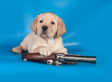 Not actual dog. Or actual gun.