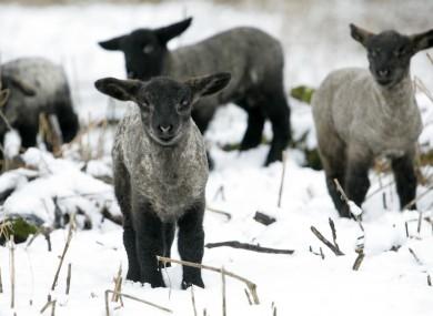 File photo of snow in Kildare.