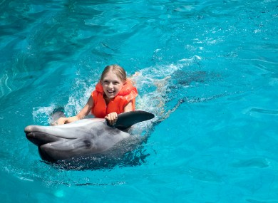 hawaii s banning people from swimming with dolphins tour operators