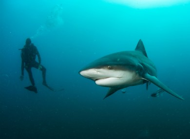 The bull shark attack happened off the north-east coast of Australia.