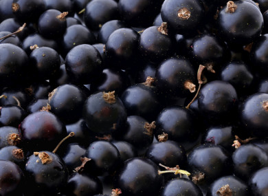 Blackcurrant Waste From Ribena Production Could Create Natural