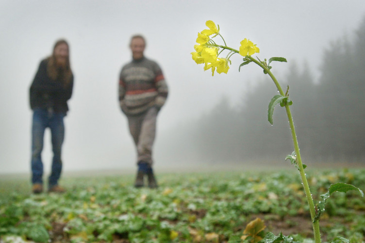 Ireland's decision to prohibit GM crops doesn't make sense'