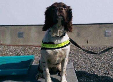 Revenue's detector dog Meg