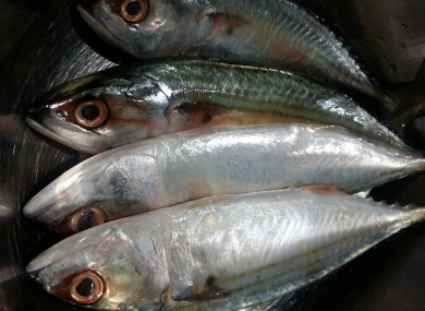 File photo of mackerel