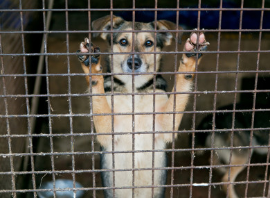 New Rules Around Kennel Sizes Among Dog Breeding Guidelines