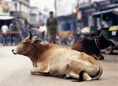 File photo of a cow in the Indian city.